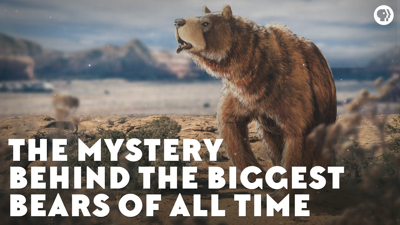 The Mystery Behind the Biggest Bears of All Time