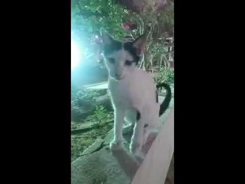 I FOUND RARE BREED OF CAT IN DUBAI