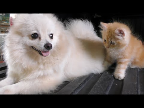My Dog Meeting Funny Cat  My Dog No React to Funny Cat
