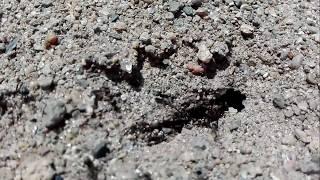 春、アリの巣を観察。 Observation of ant nest