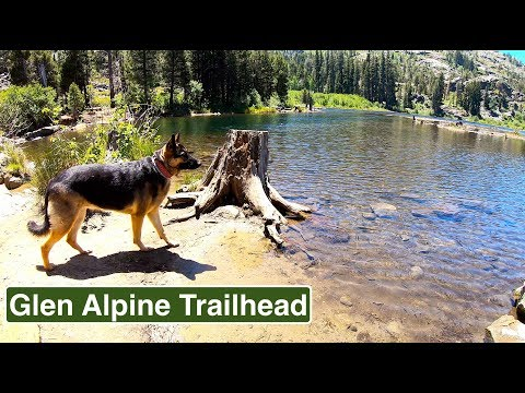 Glen Alpine Trail Hiking with German Shepherd Hiking with Dog in the wilderness - forest