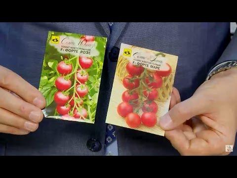 Сорта томатов для Подмосковья ✅ Выбираем лучшие семена ✅ Сад и огород с HitsadTV
