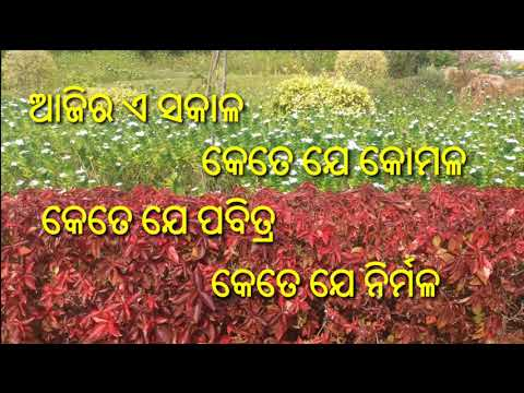 Subha Sakaala || Good Morning Wishes Video With Odia Shayari || Download Link On Description.