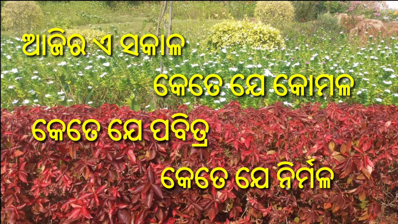 Subha Sakaala Good Morning Wishes Video With Odia Shayari