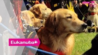 Hero Dogs Jumping From Helicopters - Part 1 | Extraordinary Dogs