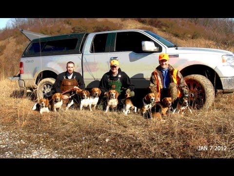 Greg Hanner Rabbit Hunt Jan 7th 201 Buffalo Lake WV
