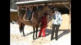 Активность: учимся ездить рысью на коне