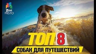 Топ 8 собак для путешествий | Top 8 dogs for travel
