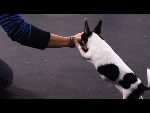 How to Teach Your Dog to Say Prayers | Dog Tricks
