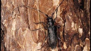 Жук-короед может уничтожить более 1500 гектаров леса