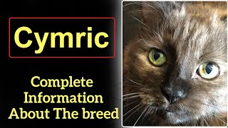 Cymric. Pros and Cons, Price, How to choose, Facts, Care, History