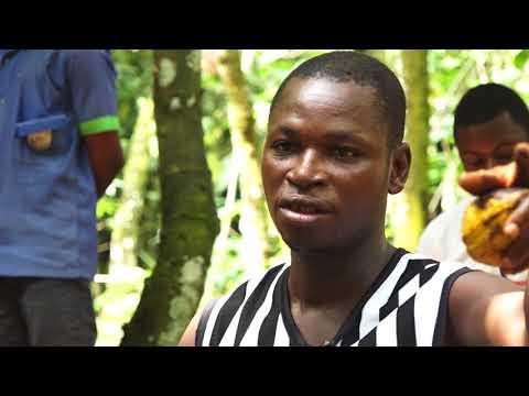GHANA COCOA FARMERS CRY