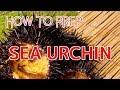 How to Prep Live Sea Urchin (Uni) for Sushi and Sashimi【Sushi Chef Eye View】