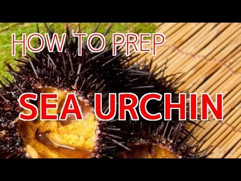 How To Prep Live Sea Urchin (Uni) For Sushi And Sashimi【Sushi Chef Eye View】
