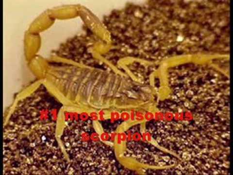 Top 10 Most Venomous/Poisonous Animals!