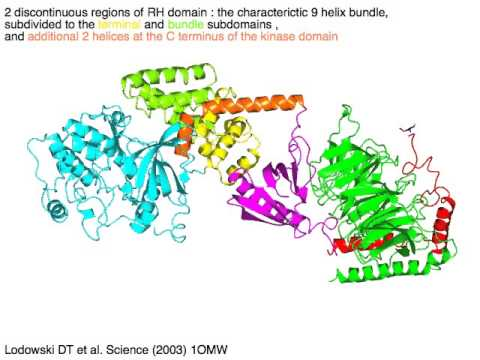 G protein coupled receptor kinase - G protein complex