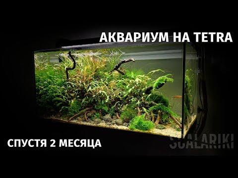 Мой аквариум на Tetra спустя два месяца. Последнее видео 2018