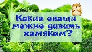 Какие овощи можно давать хомякам? | Питание хомяков ★