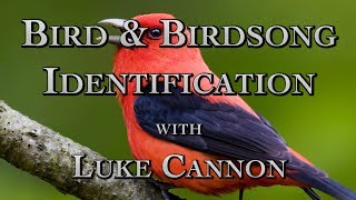 Bird & Birdsong Identification with Luke Cannon