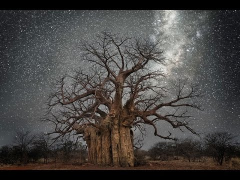 Greatest Moon Captures Of The World's Oldest Trees Illuminated By Starlight Of All Time