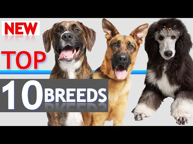 Top 10 Dogs