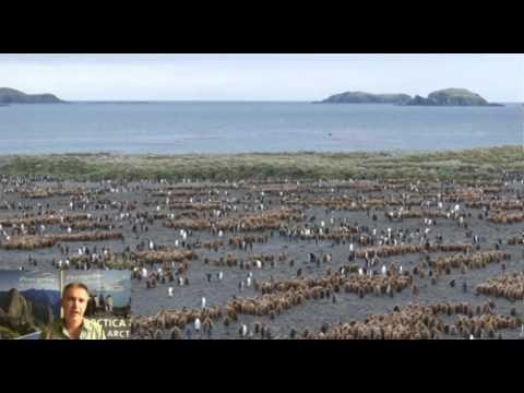 Antarctic Wildlife With Tour Guide Alex Burridge - Peregrine Tours