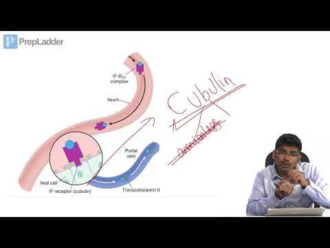 Vitamin B12 - Lecture