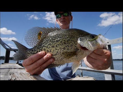 Giant Sacalait (Crappie) And More, Lake Bruin Fishing, Part 1