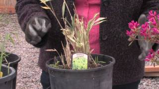 Gardening: Caring for Plants : How to Take Care of Bamboo