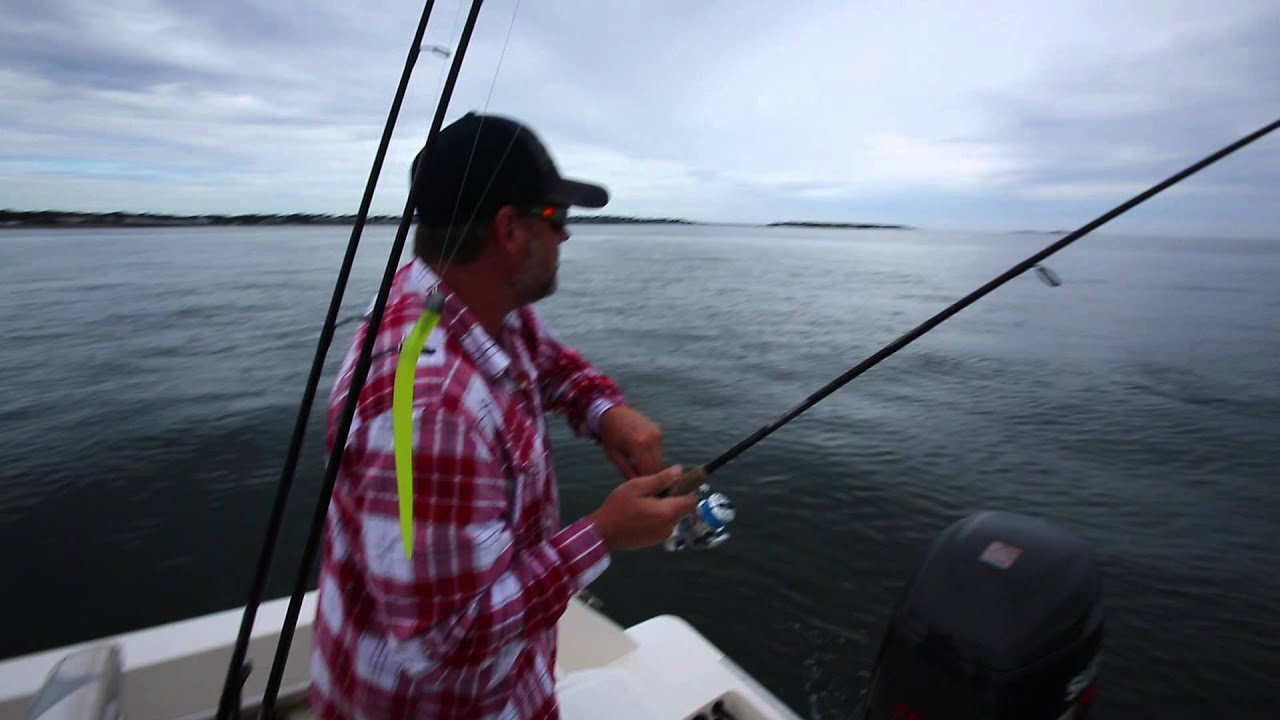 Boston harbor striper fishing on topwater floating hogy for Boston harbor fishing report