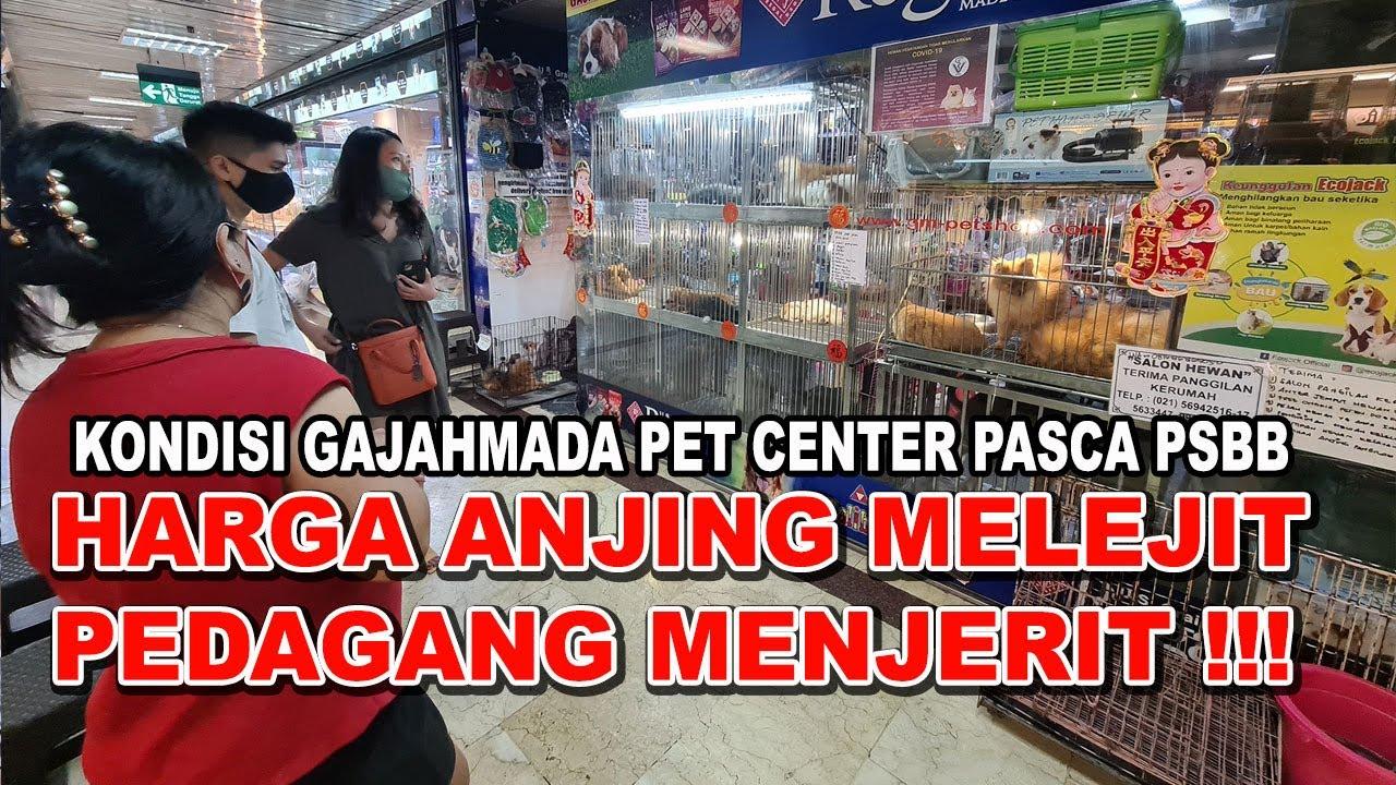 HARGA ANJING MELEJIT PEDAGANG MENJERIT !!! KONDISI PET CENTER GAJAHMADA PLAZA