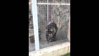 Мандрил в зоопарке Батуми