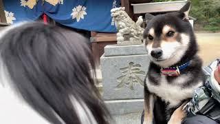 Amebaブログ「狆犬ちづひめ」2019年1月1日投稿をご覧ください。