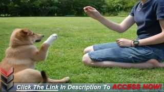 How To Train A Dog To Sit Easily