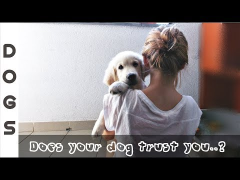 5 STEPS TO GET A DOG TRUST ON YOU