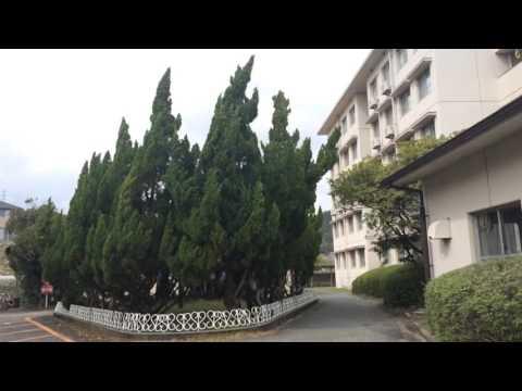 Sakura - Osaka University Minoh campus - 桜 大阪大学箕面キャンパス