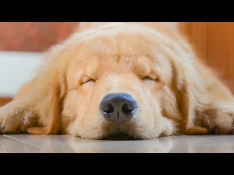 The Real Reason Your Dog Is Twitching In Its Sleep