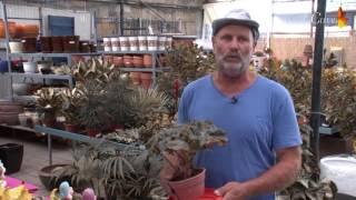 Оранжерея Каль Штиль - Как правильно  выращивать комнатные растения