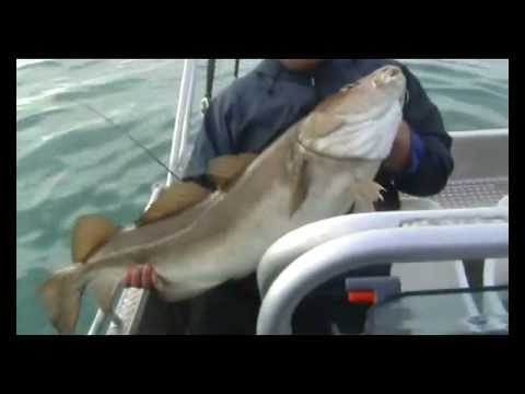 """Loppa Whoppa"" Norway Cod Fishing"