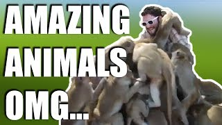 AMAZING ANIMAL ENCOUNTERS | WOW