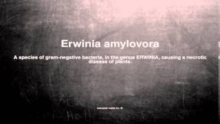 Medical vocabulary: What does Erwinia amylovora mean