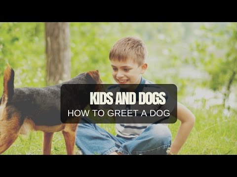 How To Greet A Dog - For KIDS! (and adults too)