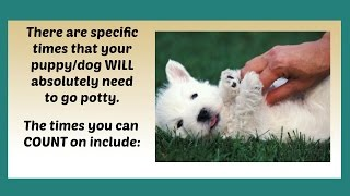 How To Potty Train A Westie Puppy | How To Housetrain A West Highland White Terrier Puppy Fast