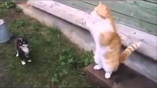 Слушайте жизнь. Смешно до упаду! Только русские коты так могут!