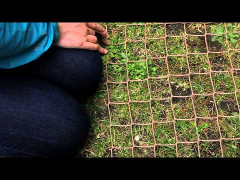 Video demo - Using Quadrats to Study Grassland Ecology