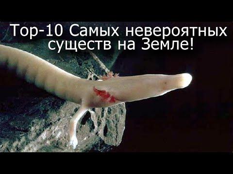 Top-10 Самых невероятных существ на нашей Планете!