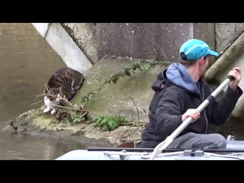Dramatic rescue of Claudia the cat from under Dolphin Bridge in Norwich.