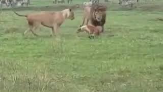 Собака напугала Львов