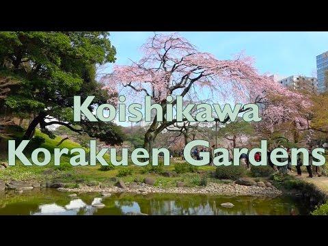 Koishikawa Korakuen Park 小石川後楽園の桜