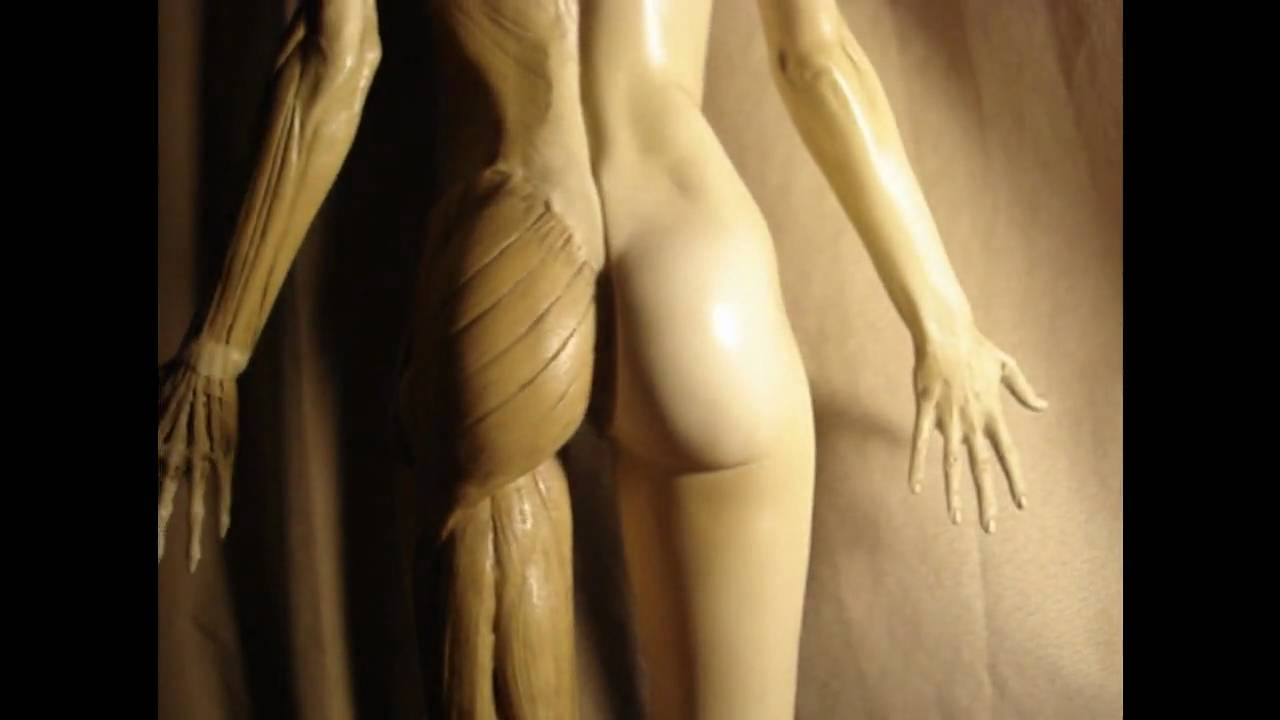Female Anatomy Model for Students - YouTube